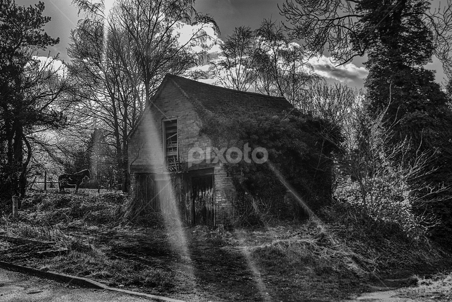 Rays by Keith Cullis - Buildings & Architecture Other Exteriors ( shed, sky, habberley valley, tree, grass, hut, horse, cloud, sunshine, sun, sun rays, rays, abandoned, building,  )