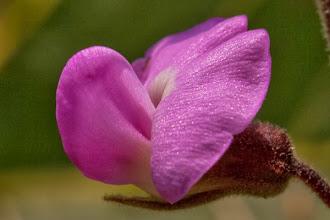 Photo: Springtime in Luando produces stunning flowers A primavera no Luando produz flores magníficas