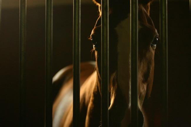 Hinter Gittern Foto & Bild | tiere, haustiere, pferde, esel ...