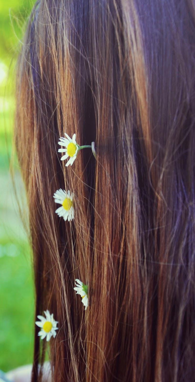 Margherite floreali di valeventimiglia