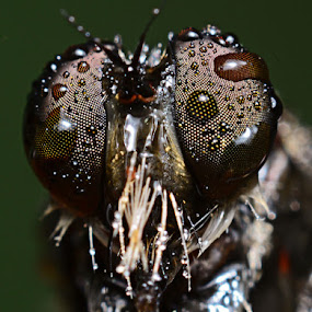 >RF< by Dhanu Wijaya - Animals Insects & Spiders