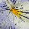 aIMG_9609_cr.jpg