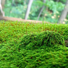 Thriving  by Mali Lubic - Nature Up Close Other plants ( life, nature, green, moss, plants )