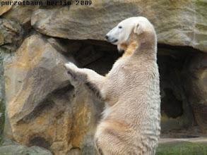 Photo: Knut ist zufrieden mit sich :-)