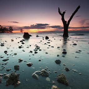 Y tree by Rodrigo Layug - Landscapes Waterscapes ( nature, waterscape, landscape )