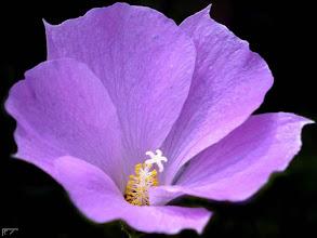 Fotografija: terapia purple 38
