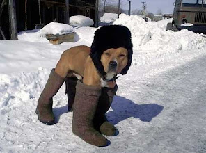 Photo: In Soviet Russia, dog walks a mile in man's shoes.