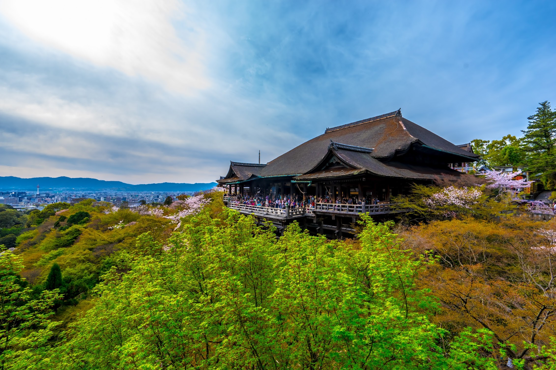 京都 清水寺 桜4