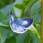 Unidentified British Butterfly