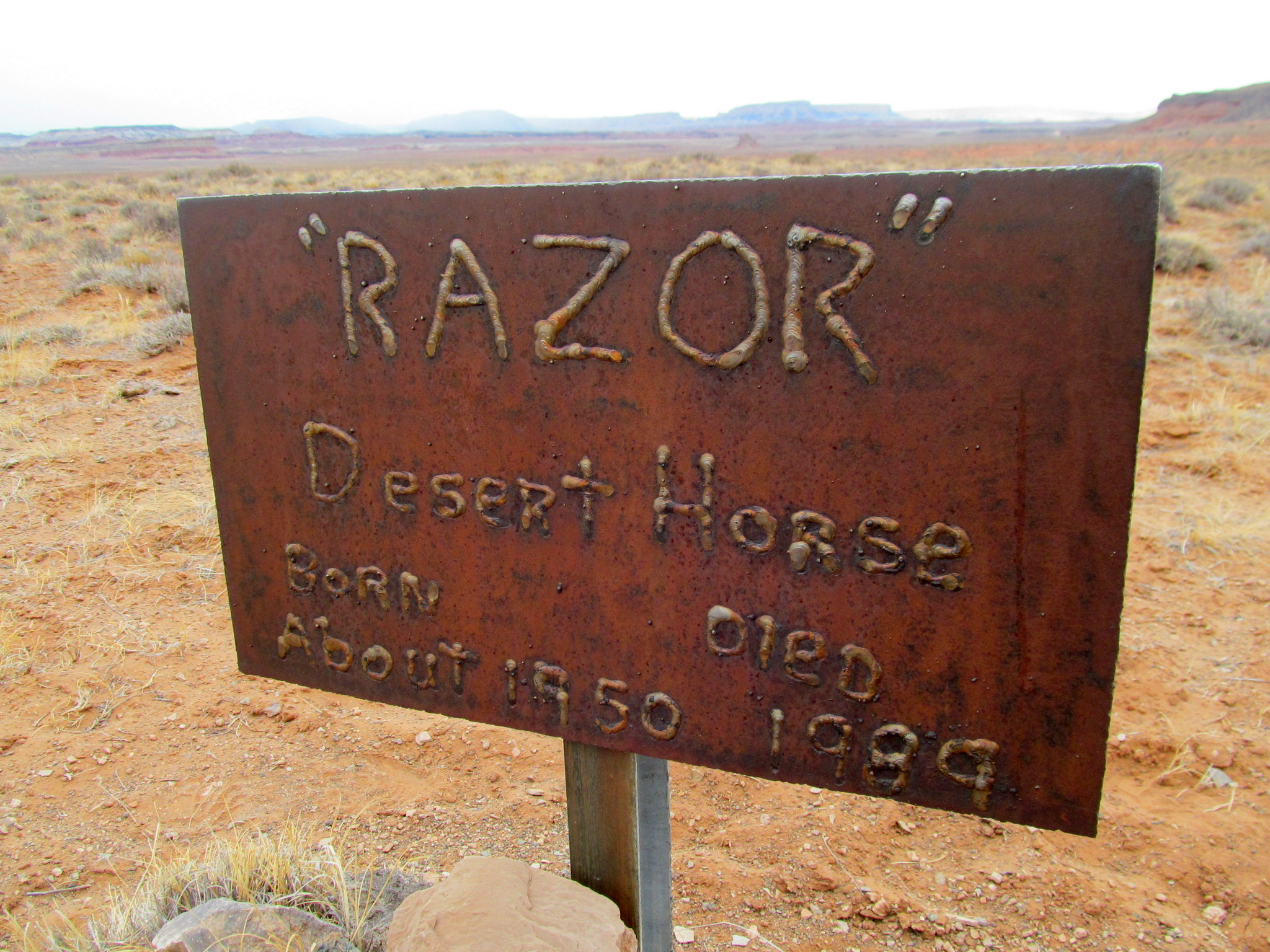 Photo: Razor the desert horse, born about 1950, died 1989