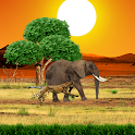 Safari Live Wallpaper icon