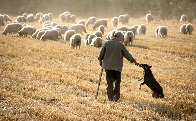 Pastori di alberto raffaeli