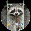Theme for Xolo A500 Raccoon Wallpaper APK