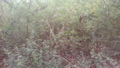 Photo: This picture shows how deep and dense the thicket is.