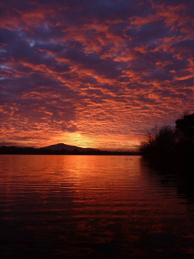Lake Burley Griffin Sunrise by Nikki Hampson - Landscapes Sunsets & Sunrises