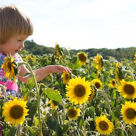 My little sunflower by Anastasiya Manuilov - Babies & Children Children Candids ( sunflowers, girl )