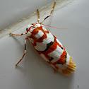 Malayan Tiger Moth