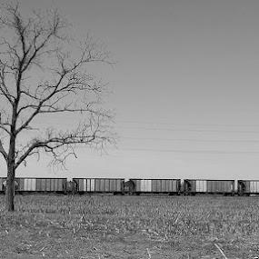 Grey Train by LuAnne Smith Holjes - Black & White Objects & Still Life