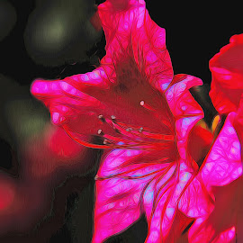 Masterful Azaila Colors by Dave Walters - Uncategorized All Uncategorized ( flowers, nature up close, lumix fz2500, colors, digital art )