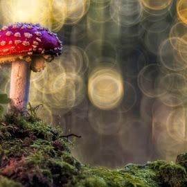 Fly agaric by Helmut Gloor - Nature Up Close Mushrooms & Fungi ( mushroom, fliegenpilz, macro, nature, amanita muscaria, fly agaric, toadstool, close up )