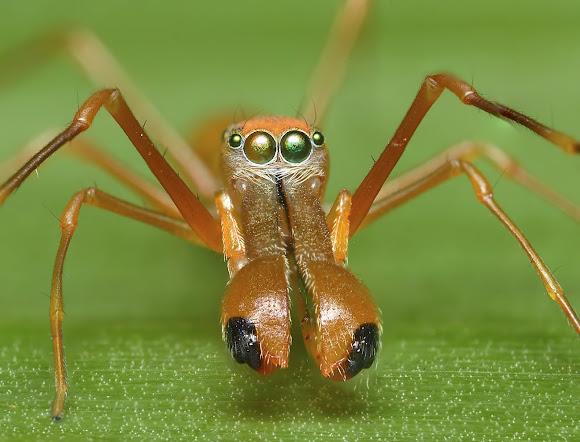 Weaver ant hunting  YouTube