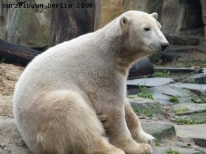 Photo: Ein ganz entspannter und zufriedener Knut :-)