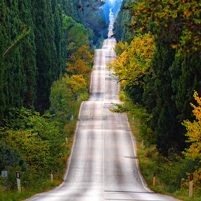 Cypresses road by Stefano Venturi - Landscapes Mountains & Hills ( tuscany, bolgheri, cypresses )