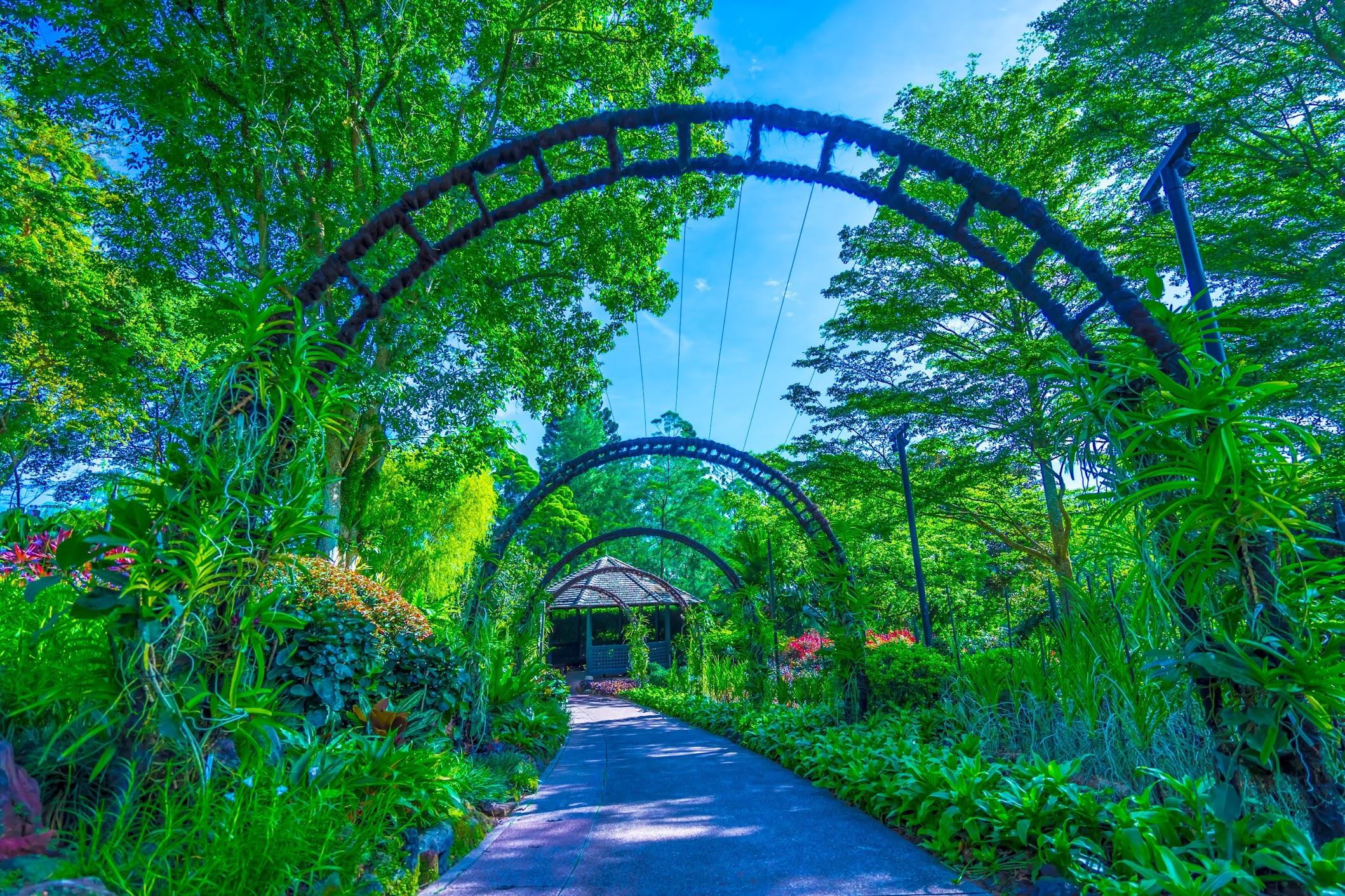 シンガポール植物園(ボタニック・ガーデン) ナショナル・オーキッド・ガーデン(国立ラン園)3