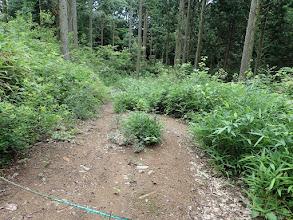 帰路は林道を進む