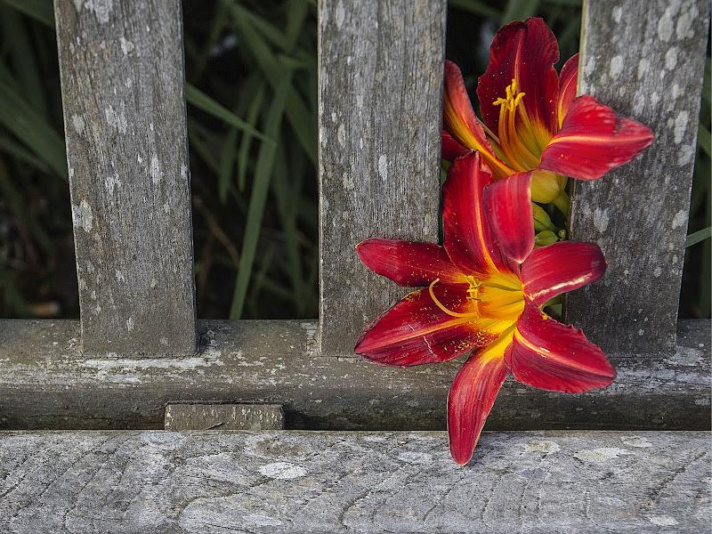 red flower di Iury olivieri