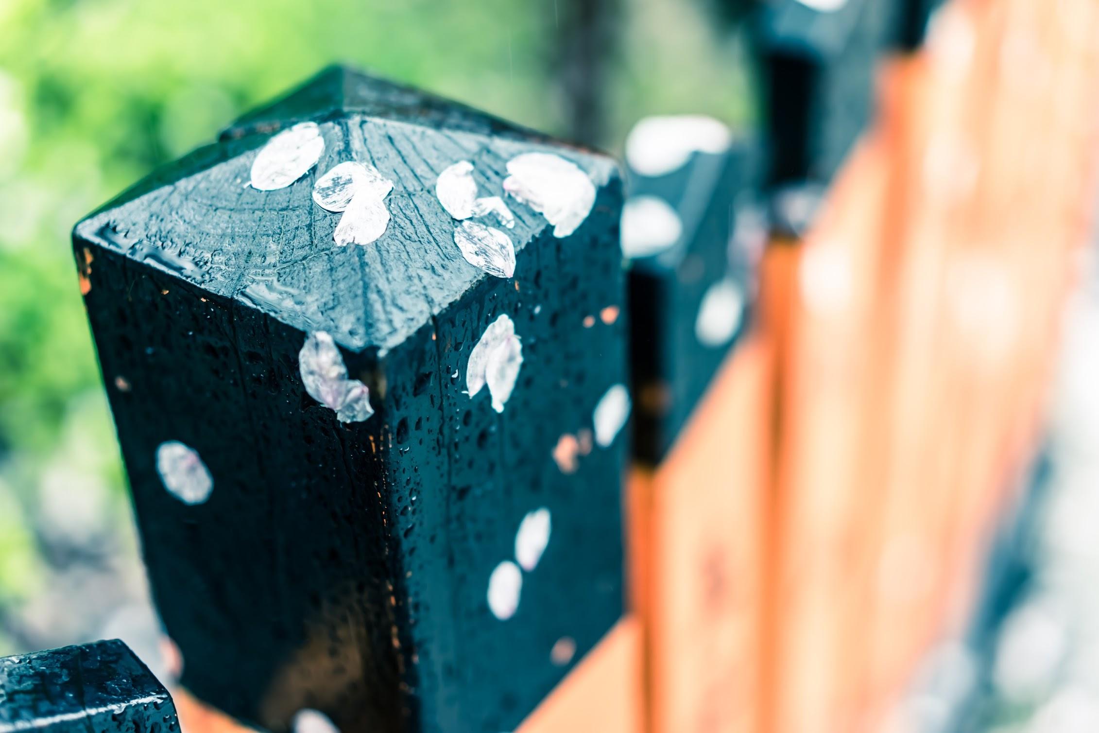 京都 祇園 桜2
