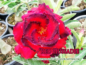 Photo: Hussadee Red