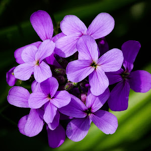 Purple Flowers-3.jpg