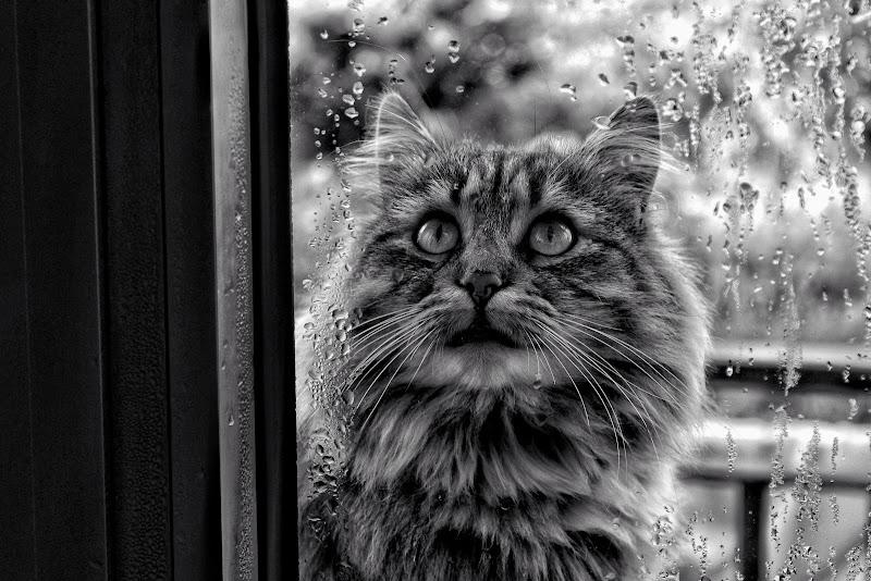 La Malinconia di un Gatto di outcryes