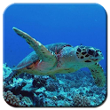 Wonderful Aquarium LWP icon