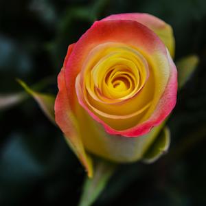 flower26-5-15.jpg