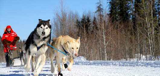 BRMB Blog - Beat the dog days of winter and have so mush fun dogsledding!