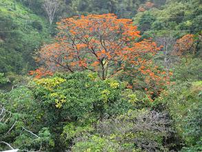 Photo: Ölümsüzlük Ağacı. Immortality tree.