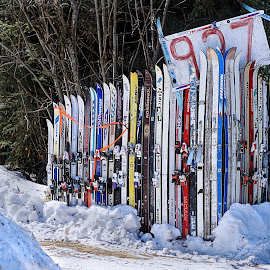 Skied Row by Julio Cardona - Sports & Fitness Snow Sports ( abstract, patterns, still life, colors, art, sports, skies, fence, winter, winteralaska, snow, arctic, light )