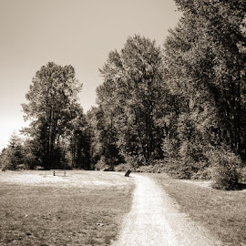 Tavistock Trail by Ernie Kasper - Instagram & Mobile iPhone ( park, brae island, forest, gravel, landscape, field, trail, path, trees, scenery, bnw, picnic table, discovery )