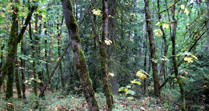 Photo: It is fall in the forests of BC.. some trees drop their clothes and reveal their frame. The decay and formation of life is a vital continuous cycle just around sight and under foot in the rainforest..