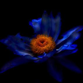 by Cheryl Larsen - Novices Only Flowers & Plants