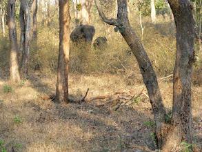 Photo: An elephant and calf