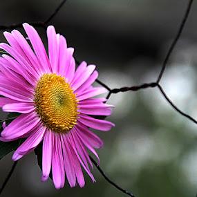 by Fernando Alves Fotografia - Nature Up Close Flowers - 2011-2013 (  )