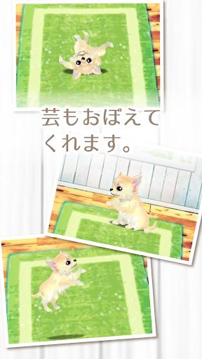 免費下載教育APP|癒しの子犬育成ゲーム〜チワワ編〜 app開箱文|APP開箱王