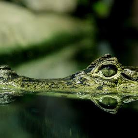 by William Bentley Jr. - Animals Reptiles
