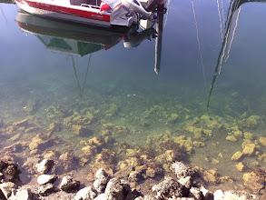Photo: Near Golden Gardens Park  Jellyfish