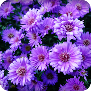 Beautiful flower wallpaper android apps on google play beautiful flower wallpaper voltagebd Image collections