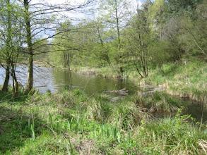 Photo: W lesie ukryte są jeziorka.