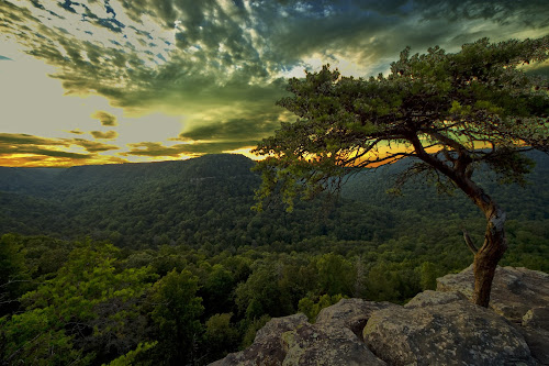 by Joel Eade - Landscapes Sunsets & Sunrises ( hills, roost, tree, awesome, valleys, sunset, beautiful, vista, scenic, perfect, buzzards, pretty,  )
